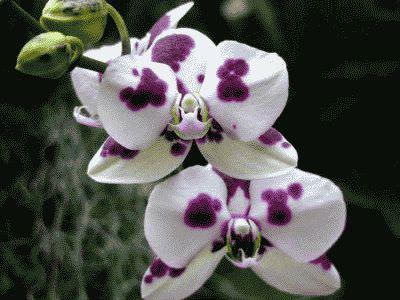 цветки разного цвета