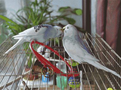 Как ведут себя попугаи