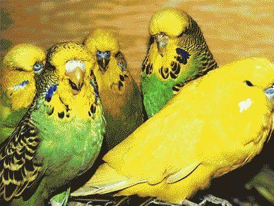 Ванны для попугаев