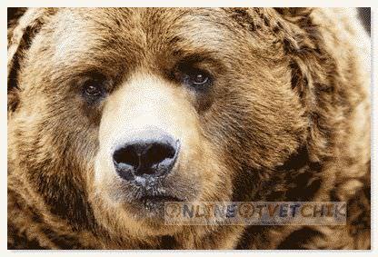 Медведи ложатся спать зимой