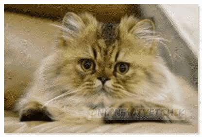 Топчут лапками маленькие котенки