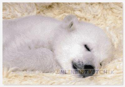 Медведи спят зимой