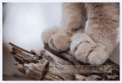 Людей топчат лапками котята