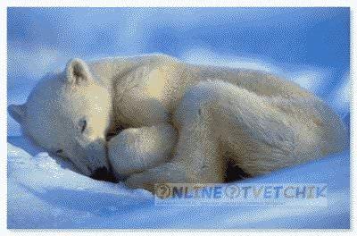 Причины сна медведей