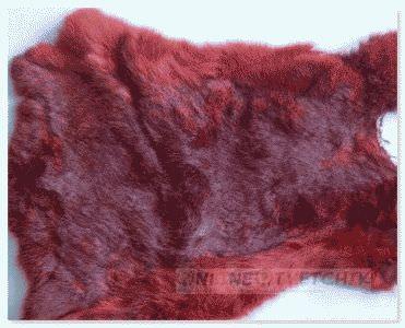 Неотразимый цвет меха