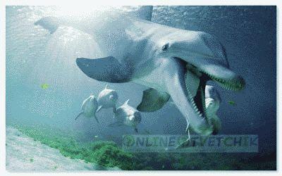 Акулы бояться стаи дельфинов