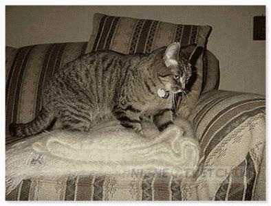 Кошка лечит своим теплом