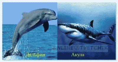 Акулы или дельфины