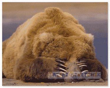 Медведи хорошие