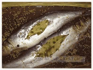 Засолка рыбы в рассоле