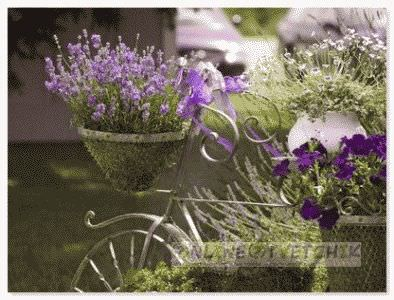 Пересадить цветок дома