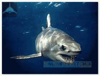 Убийца акула