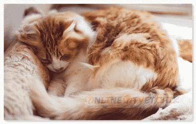 Восполение и лечение теплом кота