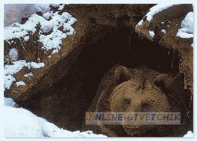 Хата медведя - его берлога