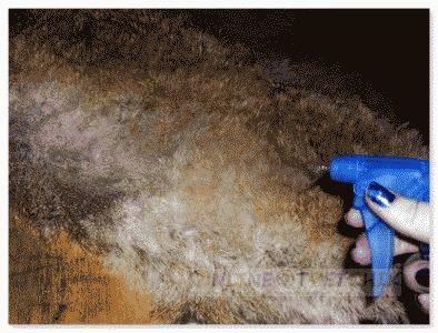 Дома покрасить мех