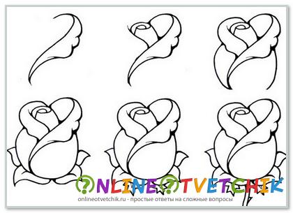 Как красиво нарисовать розу поэтапно