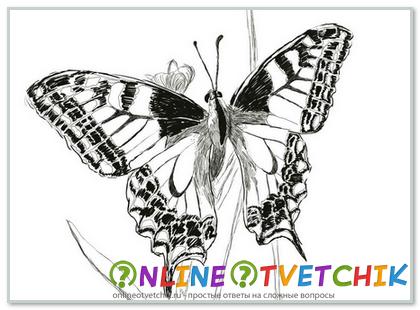 Как нарисовать бабочку карандашом