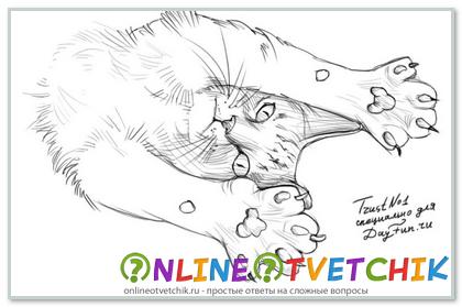 Как нарисовать лапы коту