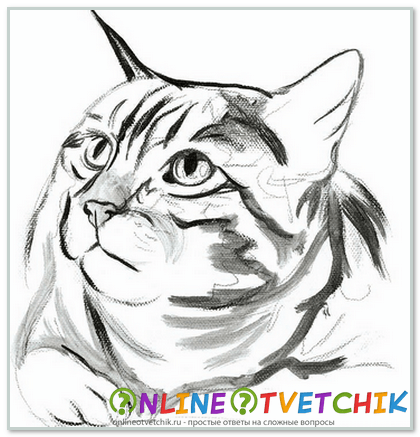 Как правильно нарисовать кошку