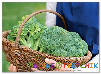 Капуста брокколи и ее выращивание