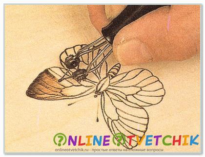 Контуры крылышек бабочки