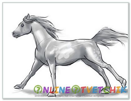 Вот лошадь и готова