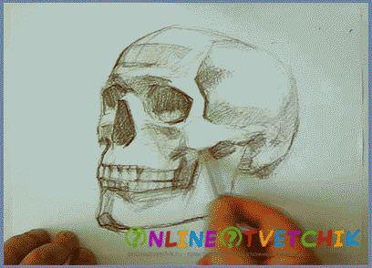 3D рисунок черепа