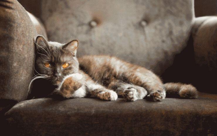 Кот-на-диване