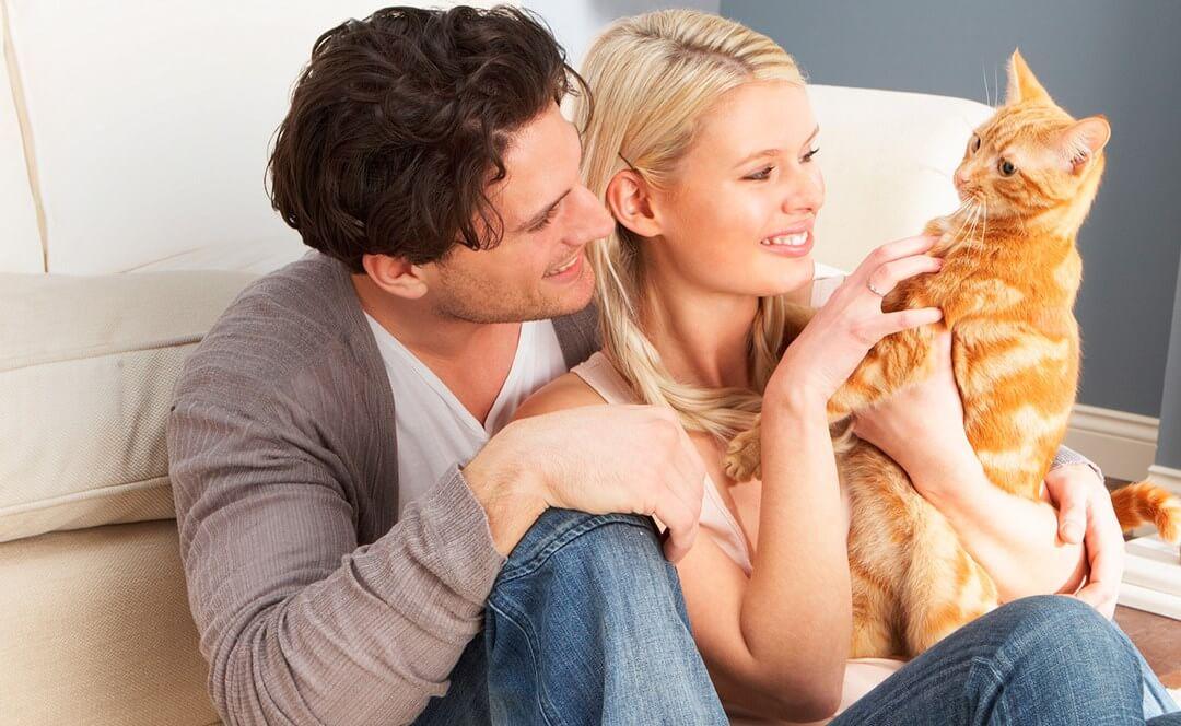 Куда деть кошку, если она не нужна?