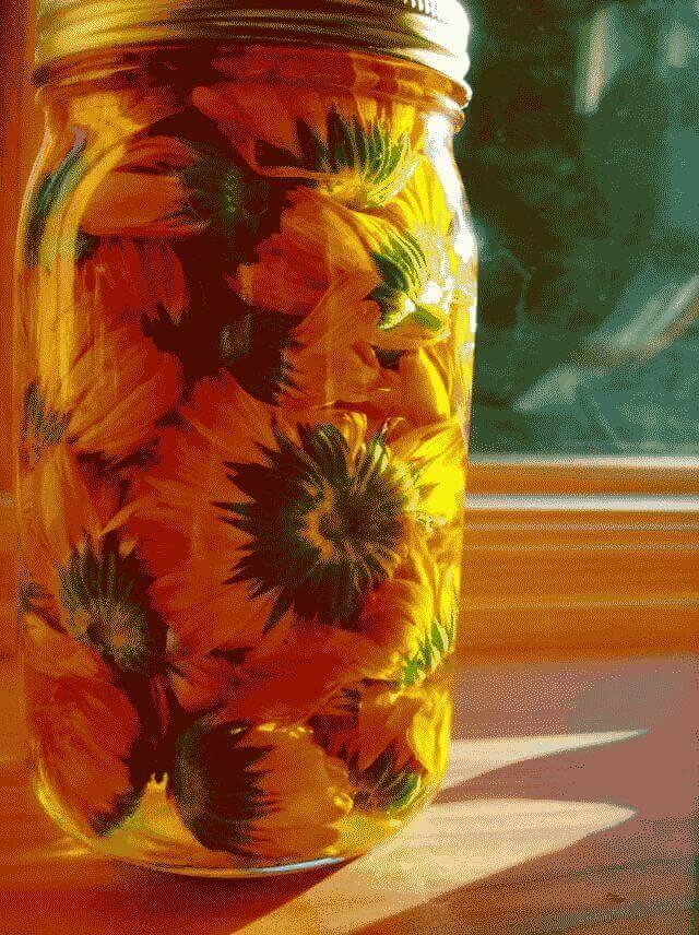 Уход за цветком диффенбахия в домашних условиях
