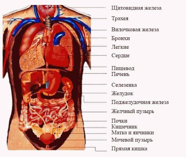Боль в правом боку под ребрами спереди и сзади
